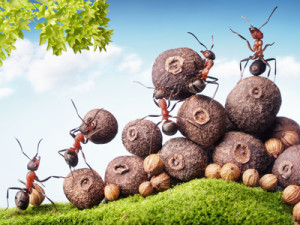Teamworking Ants